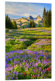 Foam board print  Tatoosh Range and Flower Meadow - Jamie & Judy Wild