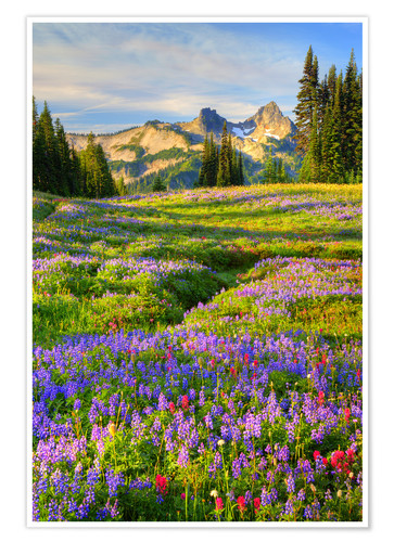 Premium poster Tatoosh Range and wildflower meadow