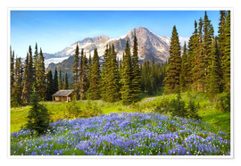 Premium poster  Wildflowers and hut under the summit of Mount Rainier - Raymond Klass