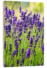 Wood  Close up of lavender flowers in a field - Rob Tilley