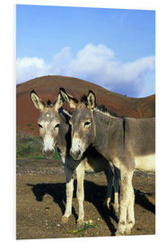 Forex  Two donkeys - Kevin Schafer