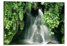 Aluminium print  Small waterfall in the rainforest - Kevin Schafer