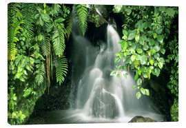 Canvas  Small waterfall in the rainforest - Kevin Schafer