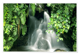 Premium poster  Small waterfall in the rainforest - Kevin Schafer
