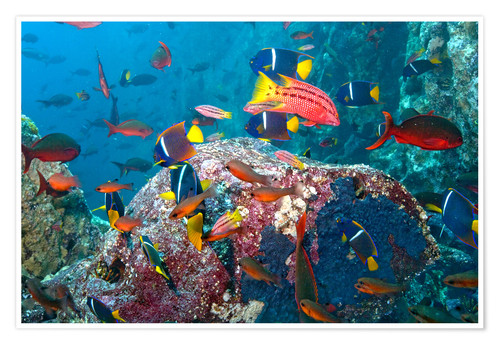 Premium poster Tropical underwater world
