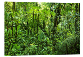 Acrylic glass  Look in the jungle - Kevin Schafer