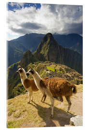Acrylic print  Llamas and a view of Machu Picchu - Howie Garber