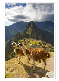 Howie Garber - Llamas and a view of Machu Picchu