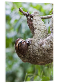 Foam board print  Sloth with baby on the branch - Jim Goldstein