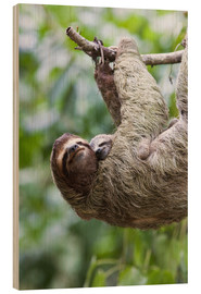 Wood print  Sloth with baby on the branch - Jim Goldstein