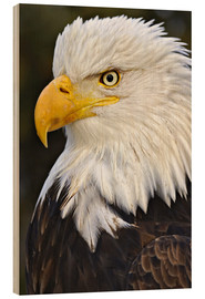 Wood  Head of a bald eagle - Adam Jones