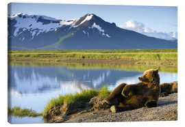 Canvas  Brown bear takes a rest - Paul Souders