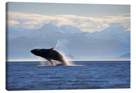 Canvas print  Humpback whale jumps out of water - Paul Souders
