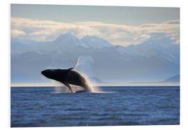 Foam board print  Humpback whale jumps out of water - Paul Souders