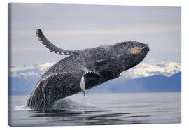 Canvas print  Humpback whale in Frederick Sound - Paul Souders