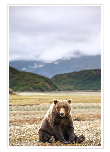 Premium poster Grizzly Bear is resting in front of Kinak Bay