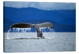 Canvas print  Fin of a humpback whale - Paul Souders