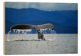 Wood print  Fin of a humpback whale - Paul Souders