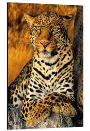 Dave Welling - African Leopard