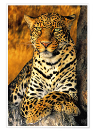 Premium poster  Enthroned Leopard - Dave Welling