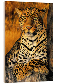 Wood print  Enthroned Leopard - Dave Welling