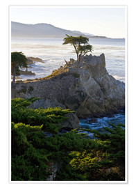 Premium poster The famous Lone Cypress on the California coast