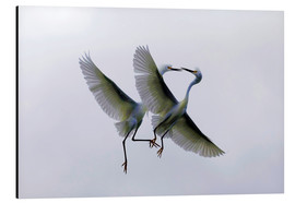 Aluminium print  Two flying herons at the courtship - Ellen Anon