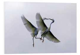 Foam board print  Two flying herons at the courtship - Ellen Anon