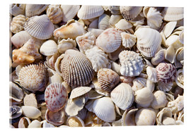 Acrylic print  Shell collection - Rob Tilley