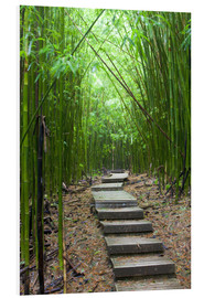 Forex  Wooden path through a bamboo forest - Jim Goldstein