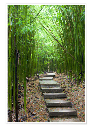 Premium poster Wooden path in the bamboo forest