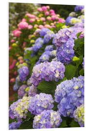 Forex  Hydrangea flower in the garden - Joanne Wells