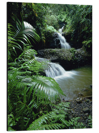 Aluminium print  Waterfall in Hawaii - Douglas Peebles