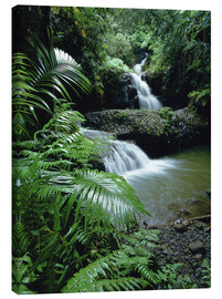 Canvas print  Waterfall in Hawaii - Douglas Peebles