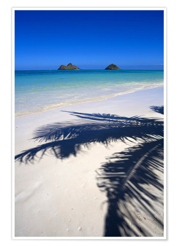 Poster Palm shadow on Lanikai Beach
