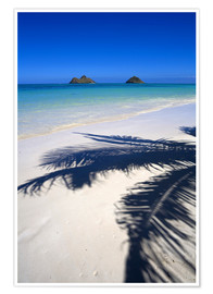 Premium poster Palm shadow on Lanikai Beach
