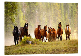 Acrylic print  Horses on a hill - Adam Jones