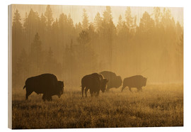 Wood print  Bisons in the golden light - Patrick J. Wall