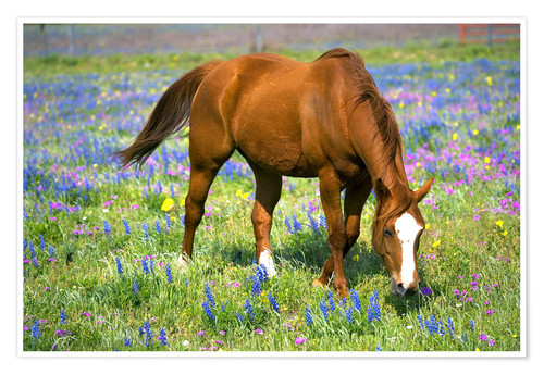 Premium poster Horse on a flower meadow