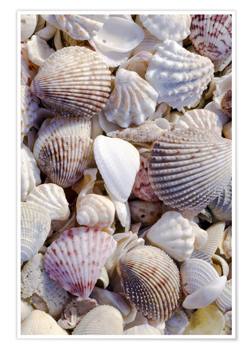 Premium poster Seashells on Beach