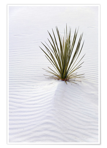 Premium poster Yucca plant on a sand dune