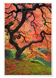 Premium poster Japanese maple in autumn