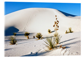 Acrylic print  Dunes of White Sands - Bernard Friel