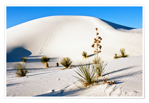 Premium poster Dunes of White Sands