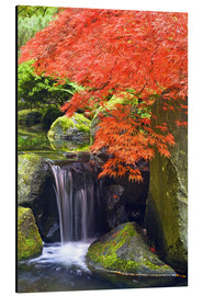 Alu-Dibond  Waterfall and Japanese maple in autumn - Don Paulson