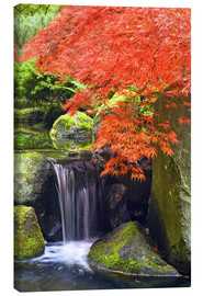 Canvas  Waterfall and Japanese maple in autumn - Don Paulson