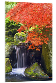 Foam board print  Waterfall and Japanese maple in autumn - Don Paulson