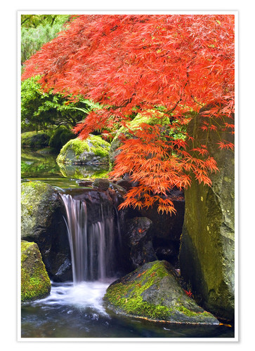 Premium poster Waterfall and Japanese Maple