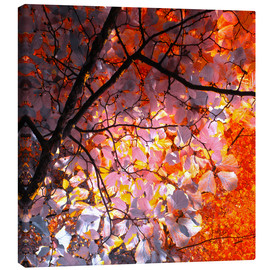 Canvas print  autumn tree I - blackpool