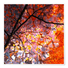 Premium poster autumn tree I